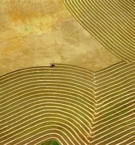 Tarım reel sektörün temeli…