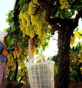 Tarımda üretici enflasyonu, tüketicinin altında kaldı…