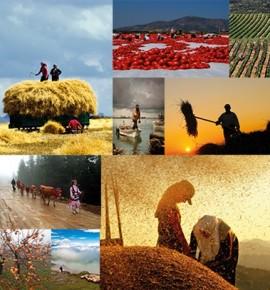 Hangi kritere bakılırsa bakılsın çiftçi enflasyonun sorumlusu değil