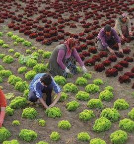 TUİK'E GÖRE İŞSİZLİK ORANI %13,8